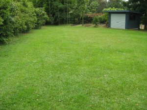 This lawn is on clay soil, and will need less water in dry times