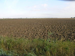 English: Clumpy Soil. It is not clear how this effect has been achieved but I suspect a combination of very dry weather followed by rain. (Photo credit: Wikipedia)