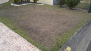 this lawn has been laid directly on sand. It's green on the edges where the water has flowed off the driveway. For best results in sandy soil give your grass at least a layer of 60mm of good water retentive soil so that it isn't so thirsty in dry weather