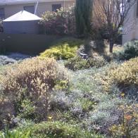 Winter: Getting rid of persistent garden weeds